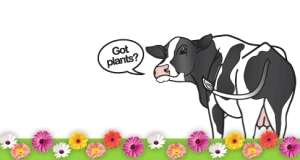 cowpots1